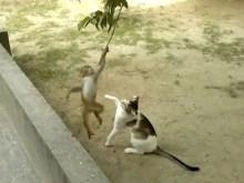 子ザルと猫