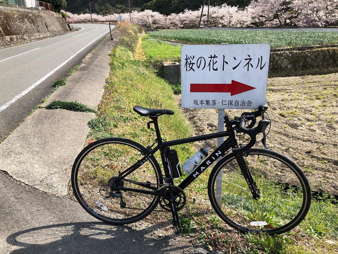 桜の花トンネル360°view RoadBike Ride